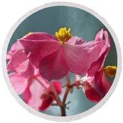 Pink Begonia Flower Portrait Round Beach Towel