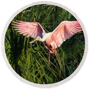 Pink Bird Flying - Spoonbill Coming In For A Landing Round Beach Towel
