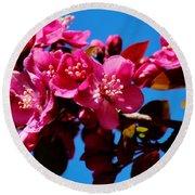 Pink Blossoms Closeup 031015a Round Beach Towel