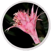Pink Bromeliad Bloom - Close Up Round Beach Towel
