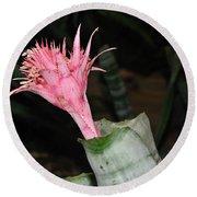 Pink Bromeliad Bloom Round Beach Towel by Kaye Menner