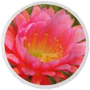 Pink Cactus Flower Of The Southwest Round Beach Towel