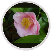 Pink Camellia About To Bloom Round Beach Towel
