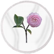 Pink Camellia On White Round Beach Towel