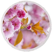 Pink Cherry Blossoms In Spring Orchard Round Beach Towel
