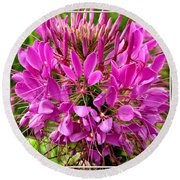 Pink Cleome Flower Round Beach Towel