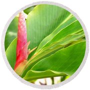 Pink Cone Ginger Bud Round Beach Towel