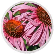 Pink Coneflowers Round Beach Towel