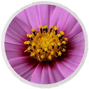 Pink Coreopsis Round Beach Towel