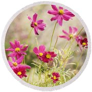 Pink Cosmos Round Beach Towel