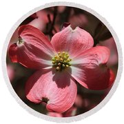 Pink Dogwood At Easter 3 Round Beach Towel
