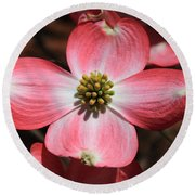 Pink Dogwood At Easter 5 Round Beach Towel