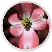 The Cross Of Christ Pink Dogwood At Easter 7 Round Beach Towel