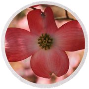 Crown Of Thorns Pink Dogwood At Easter 8 Round Beach Towel