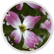 Pink Dogwood Blossom Up Close Round Beach Towel