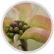 Pink Dogwood Macro Round Beach Towel