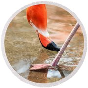 Pink Flamingo At A Zoo In Spring Round Beach Towel