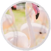 Pink Flamingo Portrait Round Beach Towel