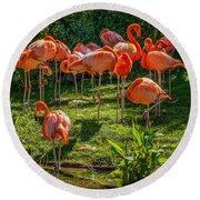 Pink Flamingos Round Beach Towel