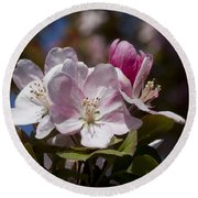 Pink Flowering Crabapple Blossoms Round Beach Towel
