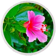 Pink Hibiscus Near Celadon Factory In Chiang Mai-thailand Round Beach Towel