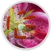 Pink Lily Up Close Round Beach Towel