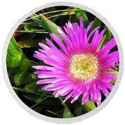 Pink Mesembryanthemum  Round Beach Towel