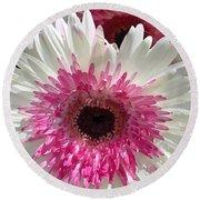Pink N White Gerber Daisy Round Beach Towel
