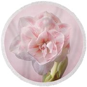 Pink Nymph Amaryllis Round Beach Towel