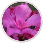 Pink Oleander Flower With Green Leaves In The Background   Round Beach Towel