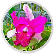 Pink Orchid At Maerim Orchid Farm In Chiang Mai-thailand Round Beach Towel