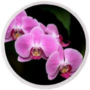 Pink Orchids In A Row Round Beach Towel