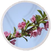 Pink Peach Blossoms Round Beach Towel