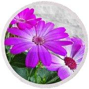 Pink Perciallis Ragwort Flower Art Prints Round Beach Towel
