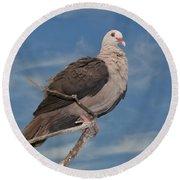 Pink Pigeon Round Beach Towel