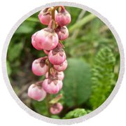 Pink Pyrola On Alpine Tundra Trail By Eielsen Visitor's Center In Denali Np-ak Round Beach Towel