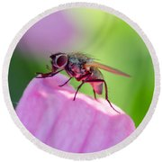 Pink Reflection On Flies Body. Round Beach Towel