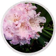 Pink Rhodies Round Beach Towel