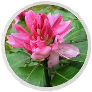 Pink Rhododendron Bud Round Beach Towel