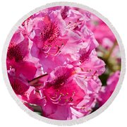 Rhododendron Called Azalea Bright Pink Flowers  Round Beach Towel