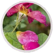 Pink Rose And Its Petals Round Beach Towel
