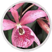 Pink Spotted Cattleya Orchids Round Beach Towel