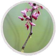 Pink Tree Flower Buds Round Beach Towel