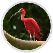 Pink Tropical Bird Round Beach Towel