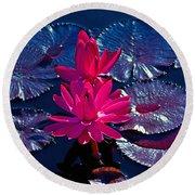 Pink Water Lilies Round Beach Towel