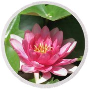 Pink Waterlily Round Beach Towel