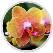 Pink Yellow Orchid Round Beach Towel