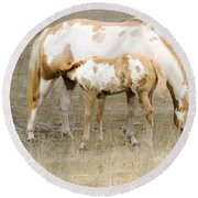 Pinto Mare And Filly Round Beach Towel