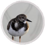 Ruddy Turnstone Round Beach Towel