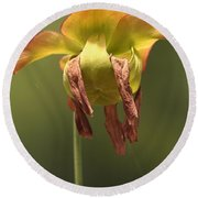 Pitcher Plant Flower Round Beach Towel